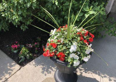 Fleurs à l'entrée de notre foyer pour retraités à Montréal - Résidence Alexis-Nihon (Résidence à Ville St-Laurent)