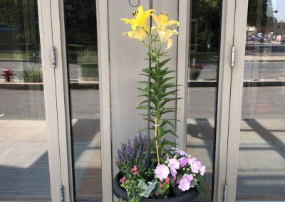 Fleurs à l'entrée de notre résidence pour retraités à Montréal - Résidence Alexis-Nihon (Résidence à Ville St-Laurent)